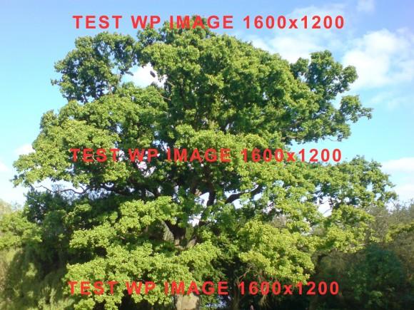 test-upload-wp-image-1600